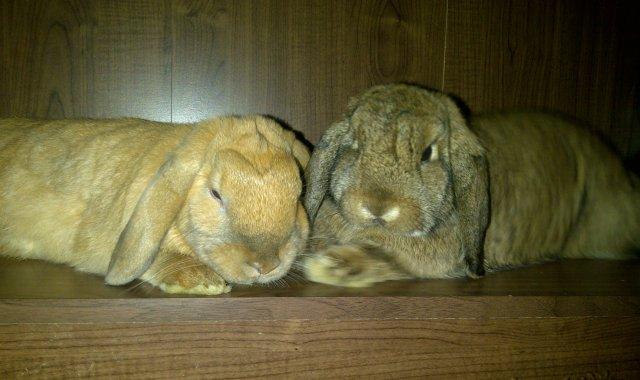 Bella & Binky