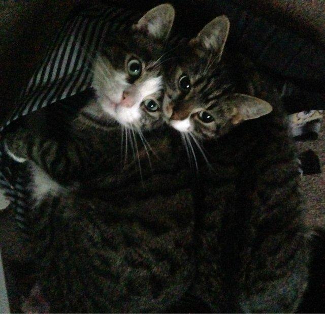 Sibling love.. <3